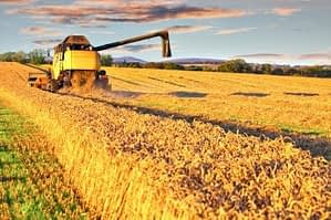 Wheat Good or Bad