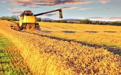 Wheat – Is it Good or Bad? Why Intolerance without an Allergy?